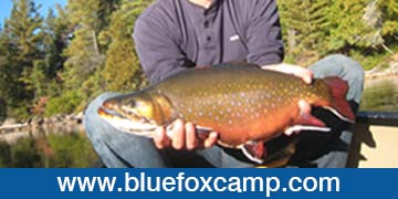 blue-fox-camp-ad-photo3