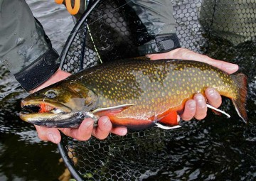 brook-trout-photo6