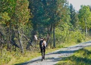 camp-wildlife-photo1
