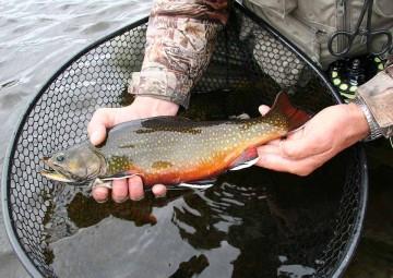 fish-species-3