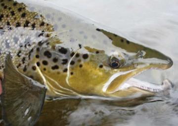 fish-species-7