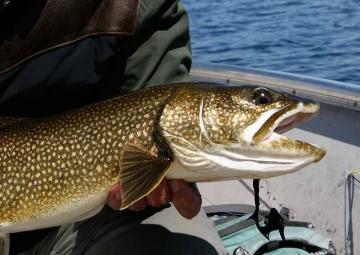 fish-species-8