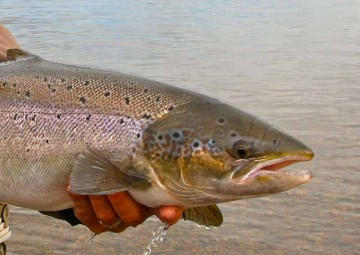 fly-fishing-photos-9