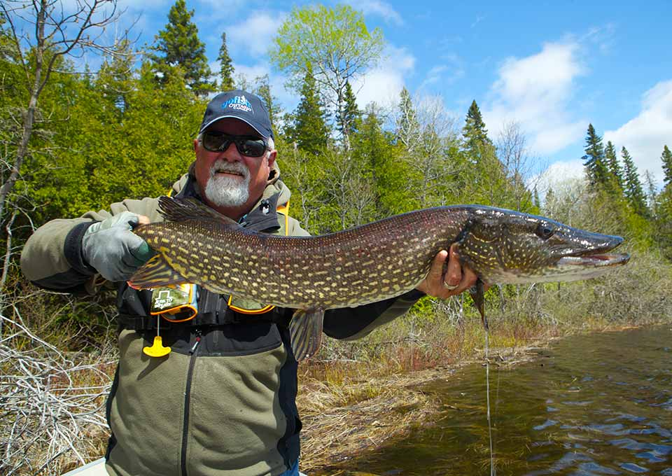 Fly in fishing lodges algoma northern ontario canada for Fly in fishing ontario