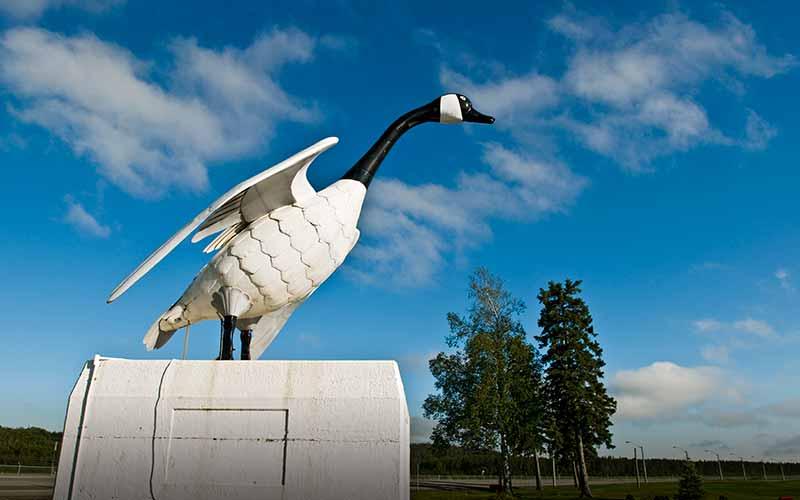must-see-wawa-goose