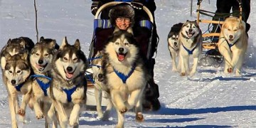 dog sledding in hearst