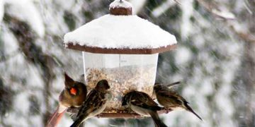 birdcount_desbarats