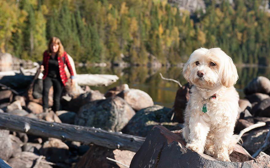 dog-photography-in-algoma
