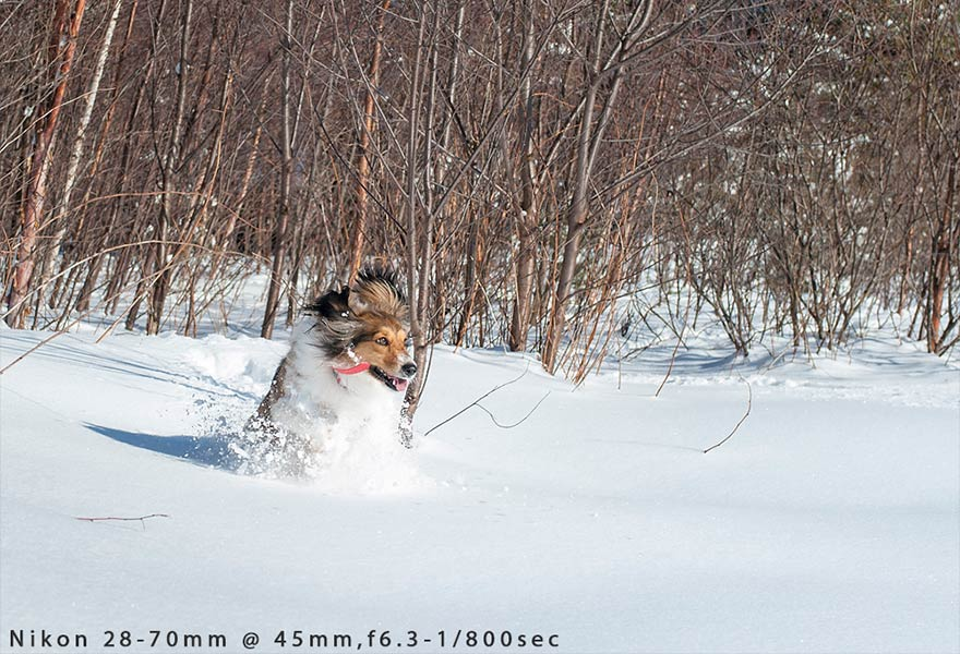 dog-playing-in-snow