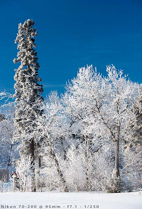 winter-landscape-trees