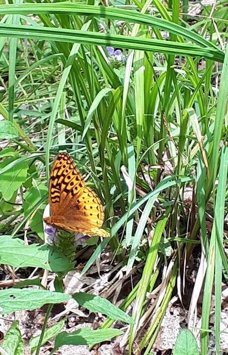 nbrash_kingmountain_butterfly