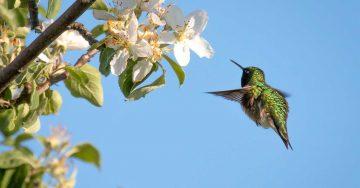 birdwatching_sheriminardi