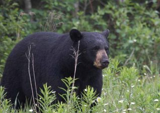 bear-hunting-photo-1