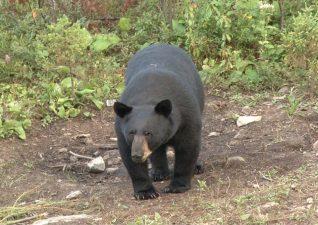 bear-hunting-photo-2