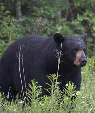 bear-hunting-profile