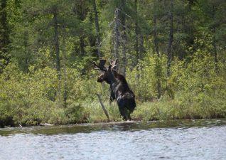 moose-hunting-photo5