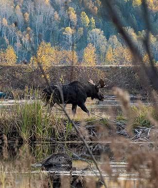 moose-hunts