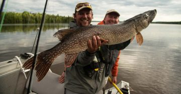 northern-pike-in-algoma