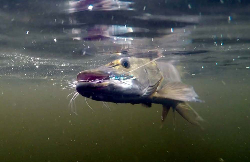 northern-pike-in-algoma-img-1