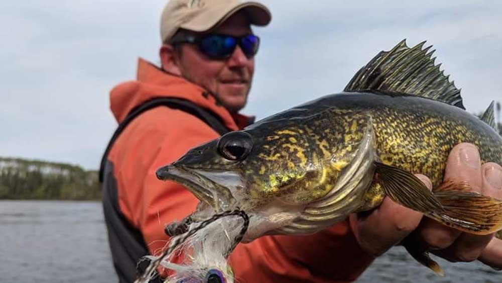 thenew-flyfisher-walleye