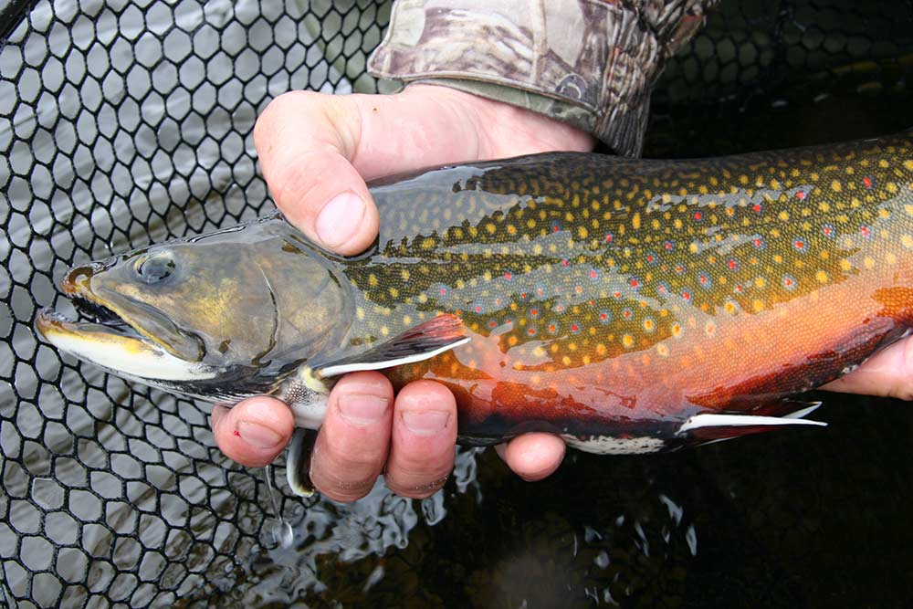 brook-trout-fishing-img10