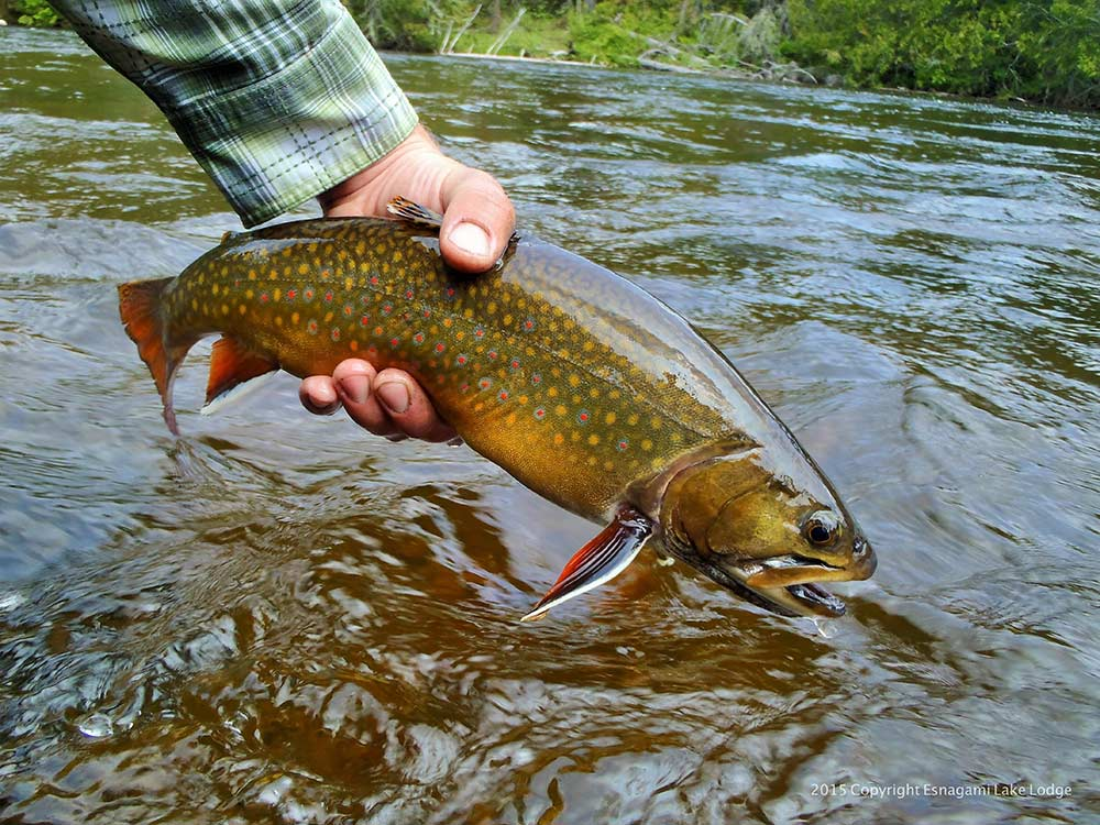 brook-trout-fishing-img9